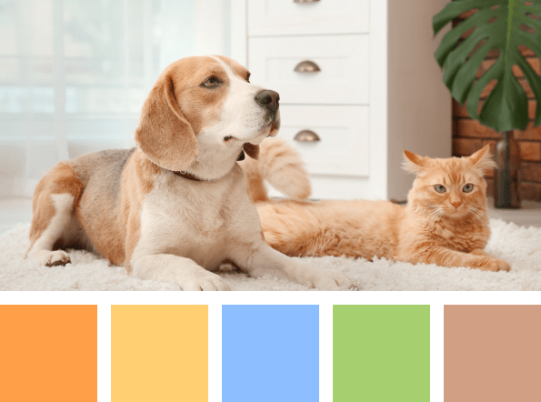 pet-supplies-palette.png