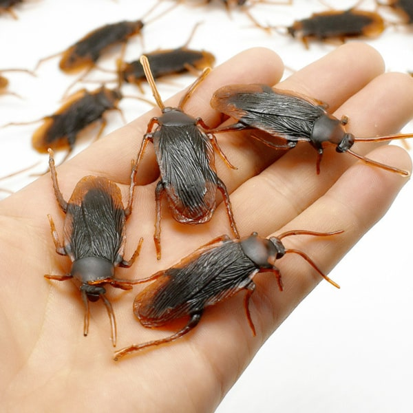 Small-Cockroaches.jpg