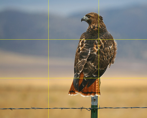 A photo of a bird taken according to the rule of thrids